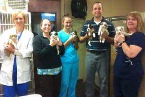 doctors-showing-aussie-puppies-300x200
